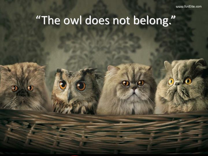 """The owl does not belong."""