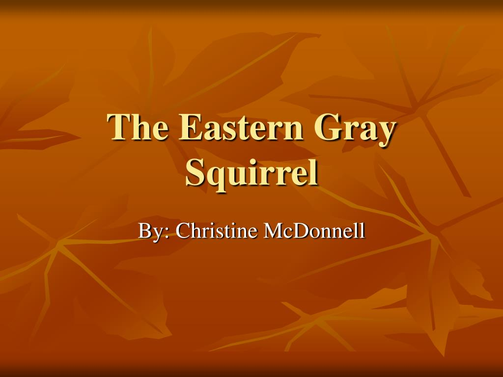 the eastern gray squirrel l.