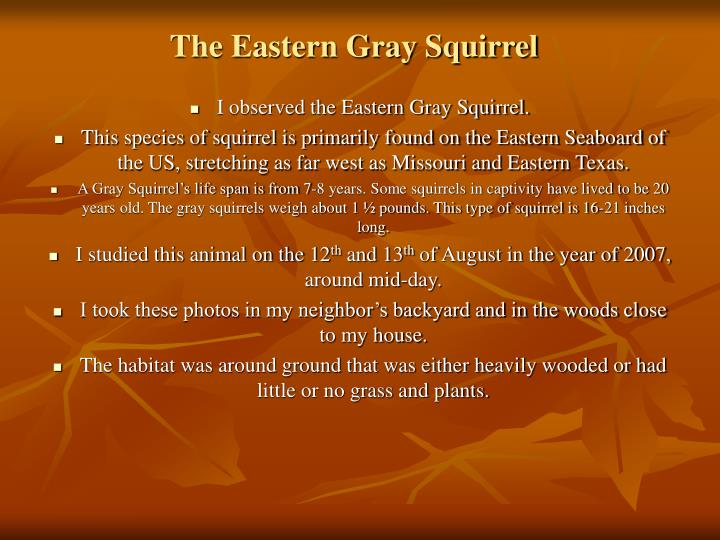 The eastern gray squirrel2