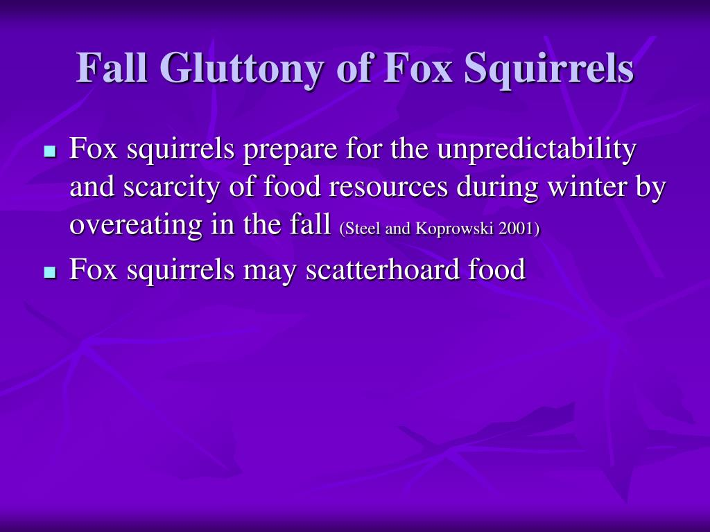 Fall Gluttony of Fox Squirrels