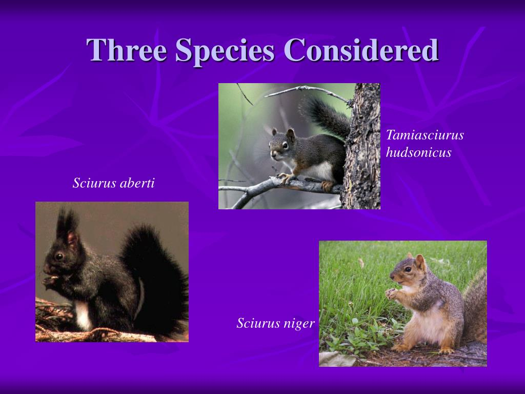 Three Species Considered