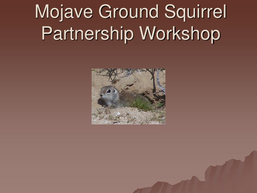 mojave ground squirrel partnership workshop