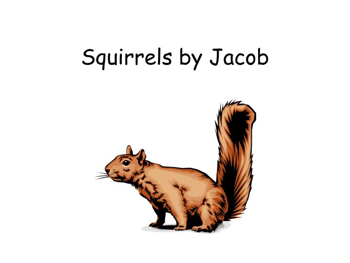 Squirrels by jacob