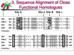 3 sequence alignment of close functional homologues