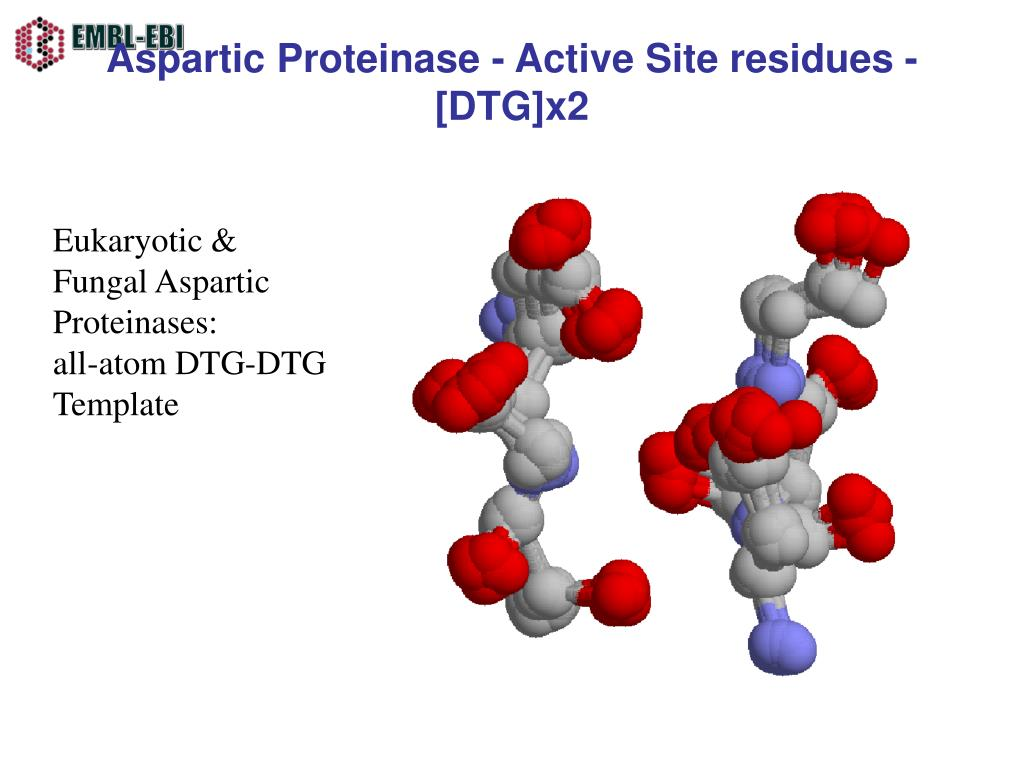 Aspartic Proteinase - Active Site residues - [DTG]x2