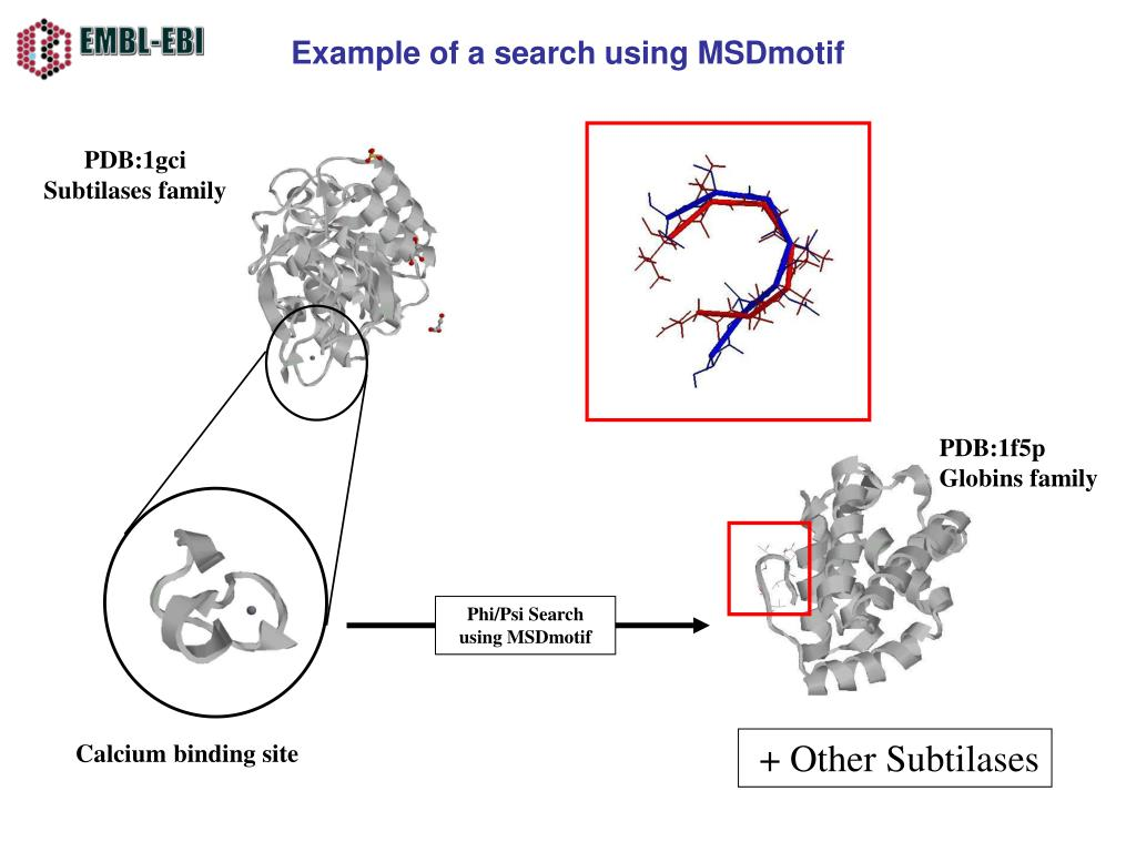 Example of a search using MSDmotif
