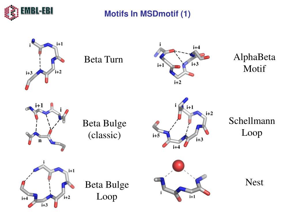 Motifs In MSDmotif (1)