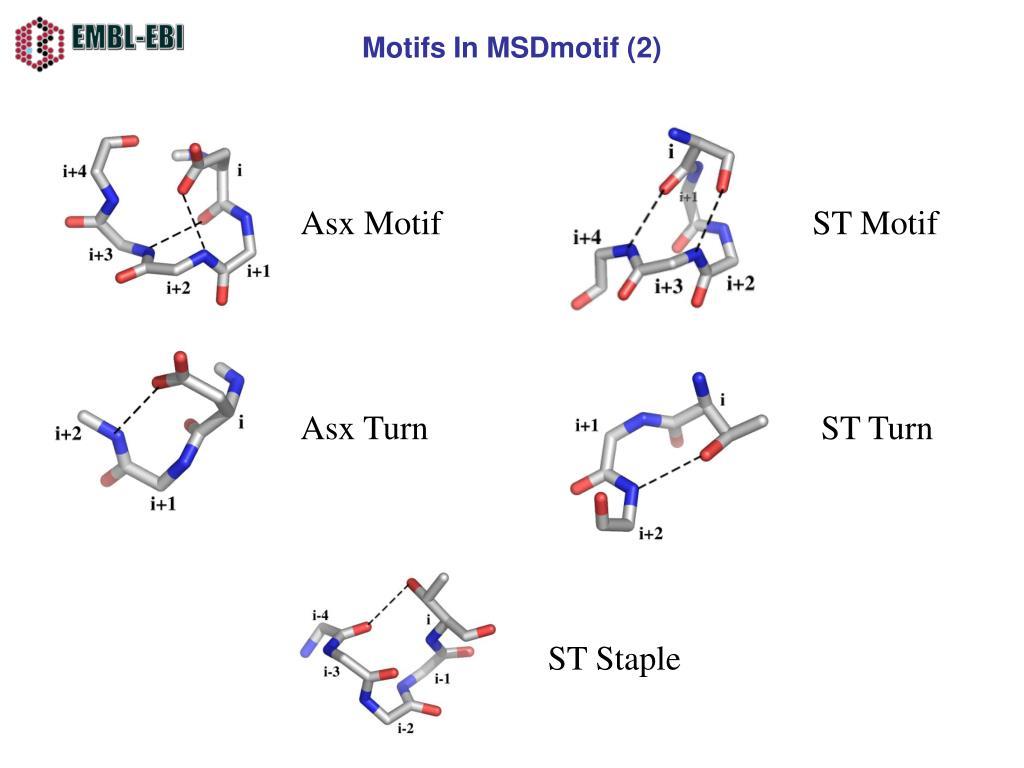 Motifs In MSDmotif (2)