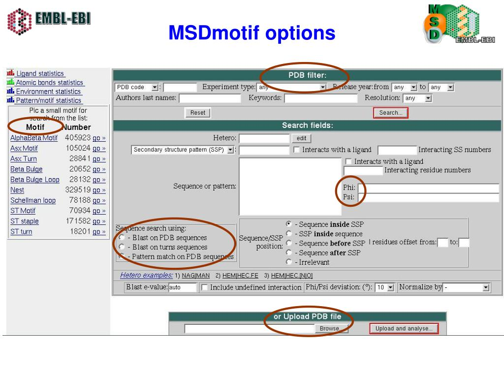 MSDmotif options