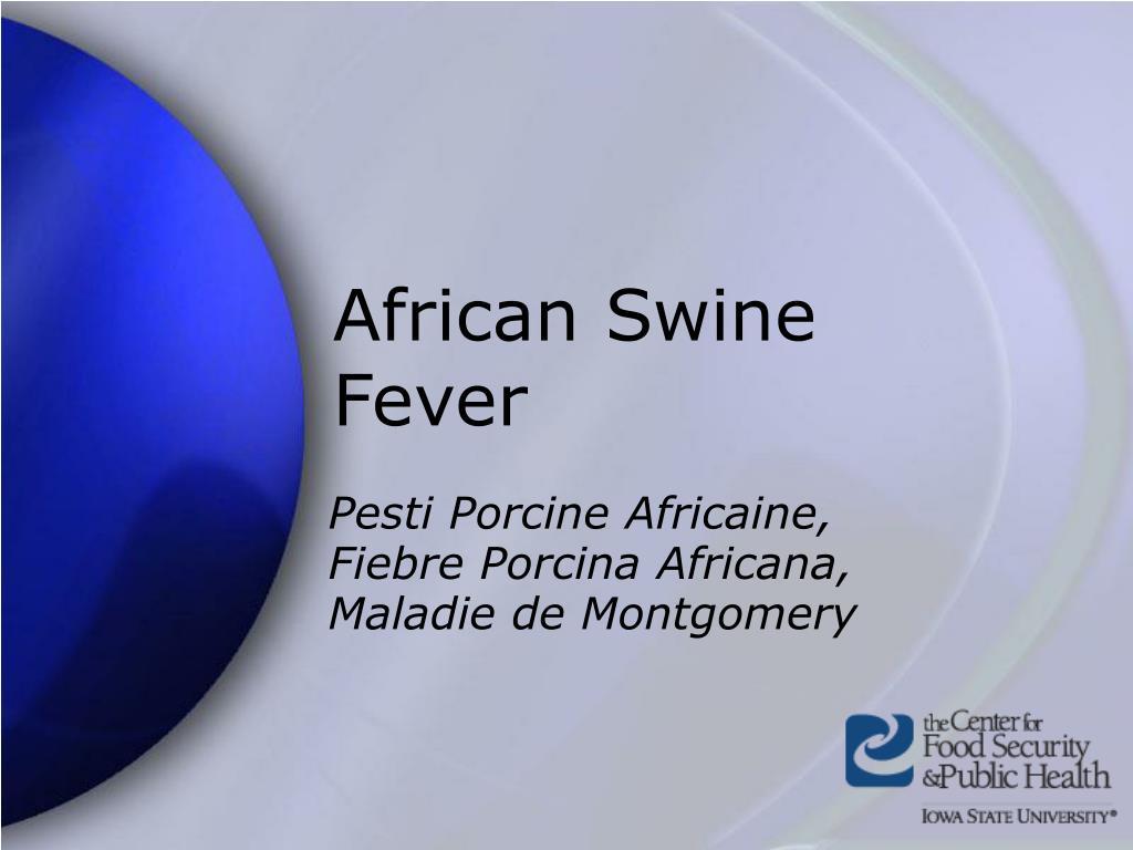 african swine fever l.