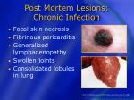 post mortem lesions chronic infection