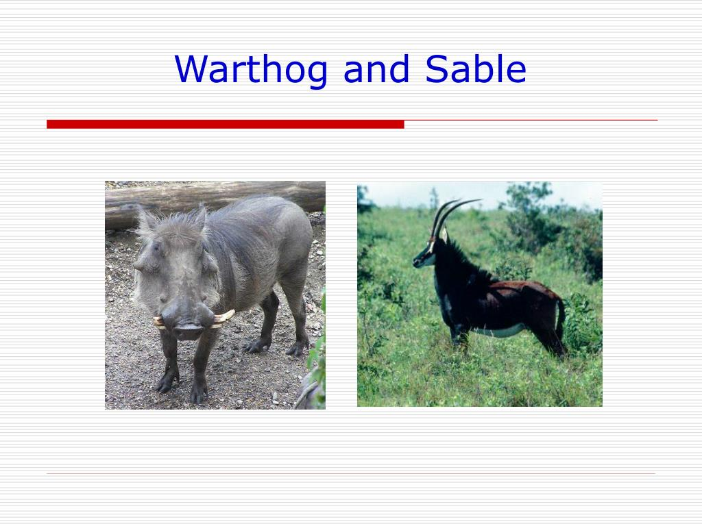 Warthog and Sable