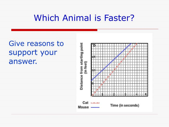 Which animal is faster