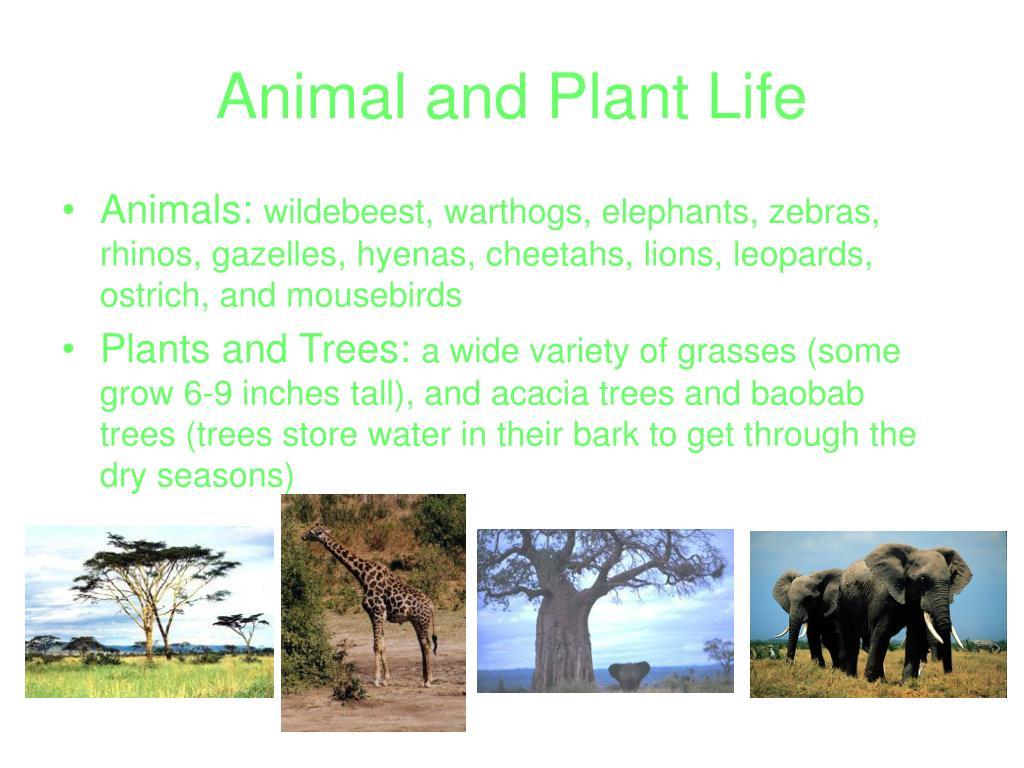 Animal and Plant Life