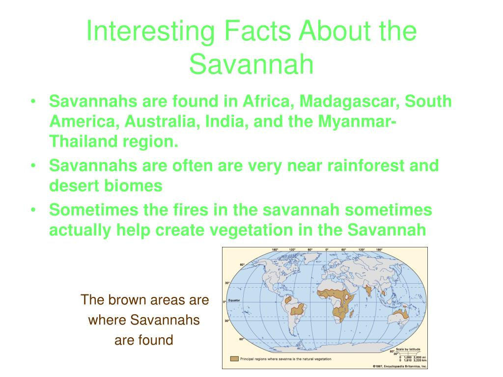 Interesting Facts About the Savannah