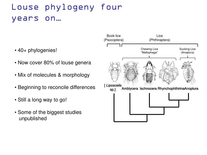 Book lice (Psocoptera)