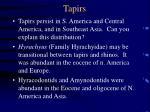 tapirs75