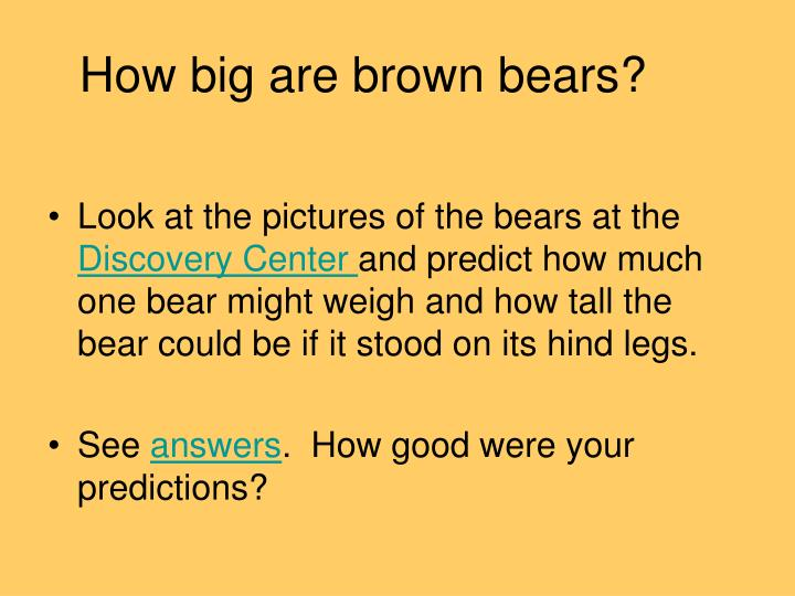 How big are brown bears?