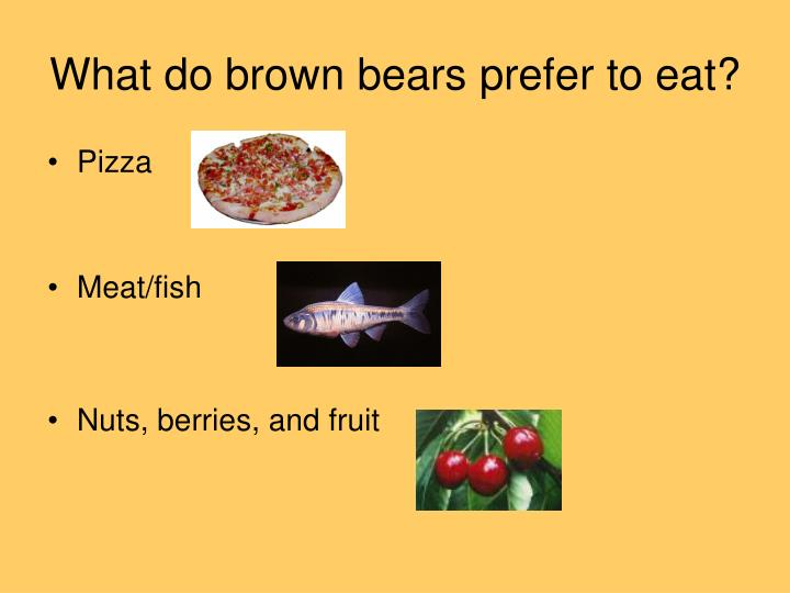 What do brown bears prefer to eat?