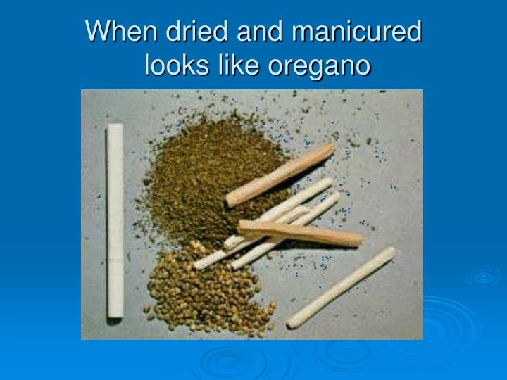 When dried and manicured