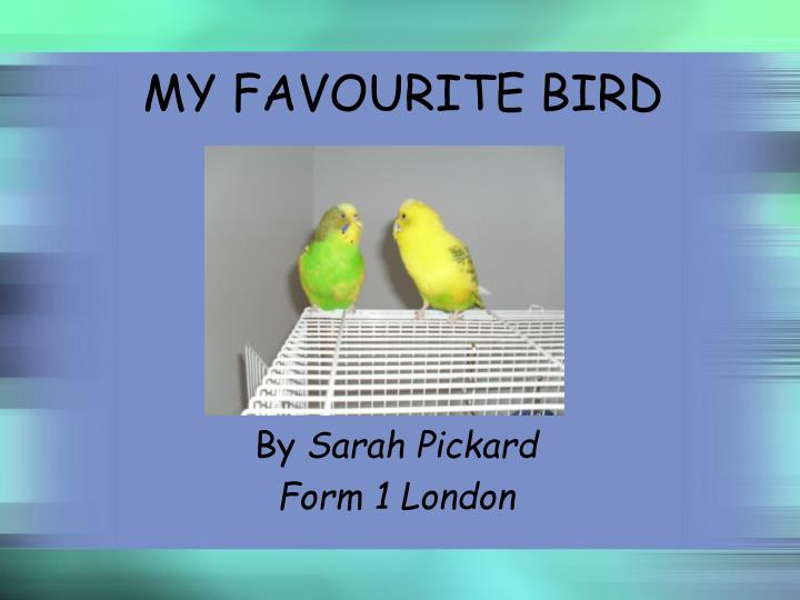 my favourite bird essay The peacock is the most beautiful of all the birds it is to love it to look at it it is the national bird of our country related articles: a short moral story on self-improvement  essay on the peacock for school students article shared by the peacock is the most beautiful of all the birds it is to love it to look at it it is the.
