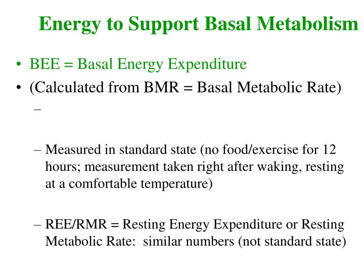 Energy to Support Basal Metabolism