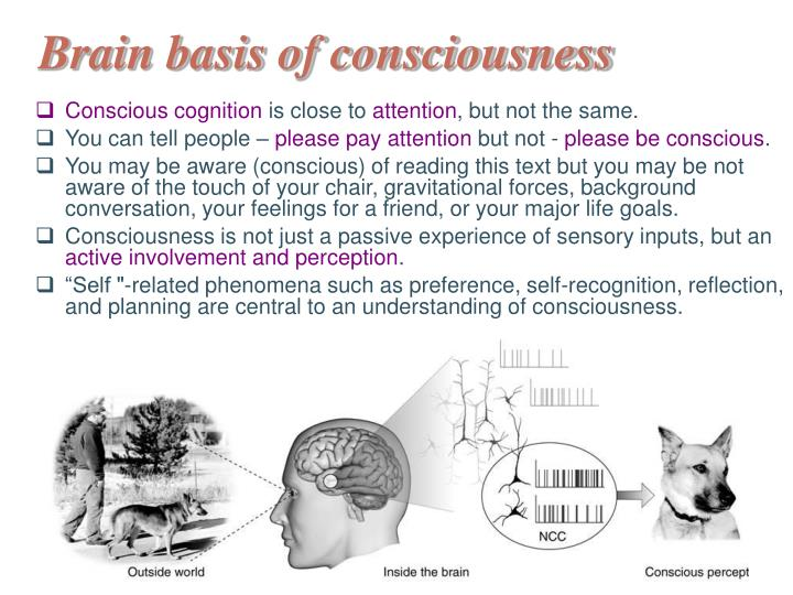 Brain basis of consciousness