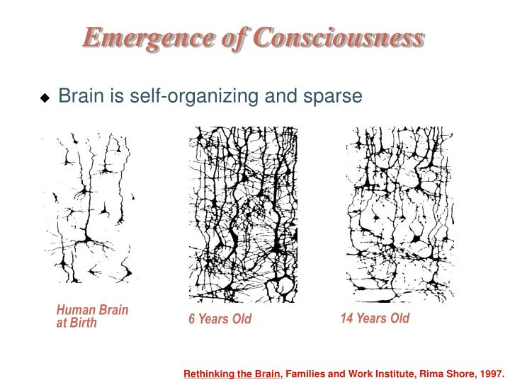 Brain is self-organizing and sparse