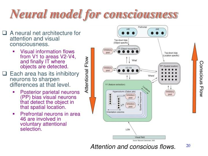 Neural model for consciousness