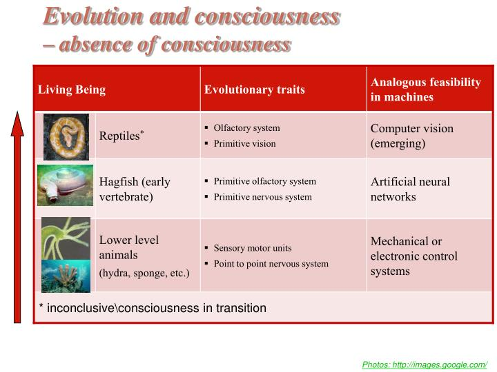 Evolution and consciousness