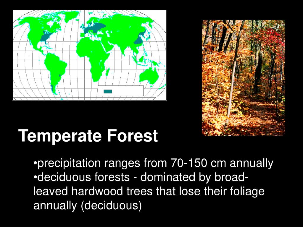 temperate forest biome essay