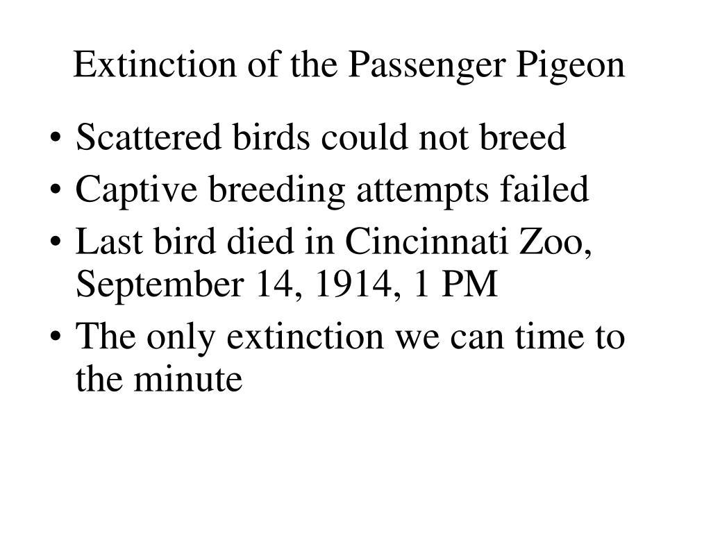 Extinction of the Passenger Pigeon