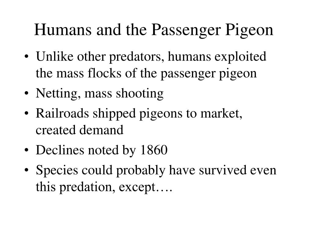 Humans and the Passenger Pigeon