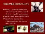 tularemia rabbit fever