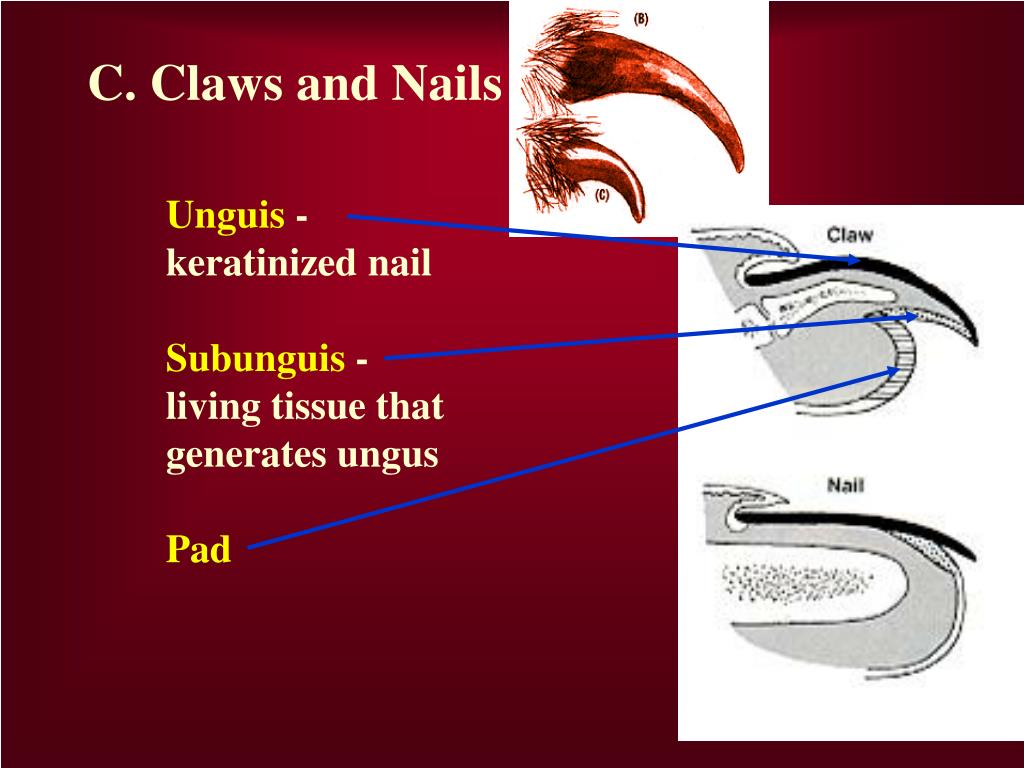 C. Claws and Nails