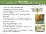 dobsonflies indicators of good water quality group one