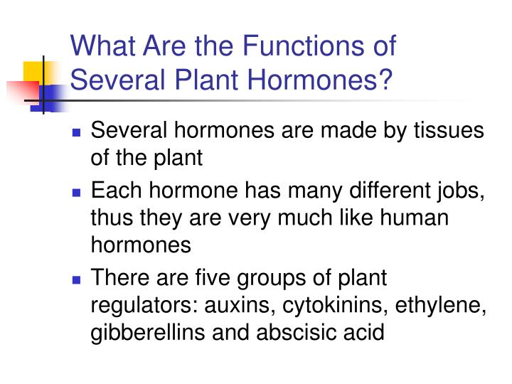 What Are the Functions of Several Plant Hormones?