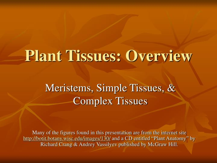 plant tissues overview n.