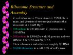 ribosome structure and assembly