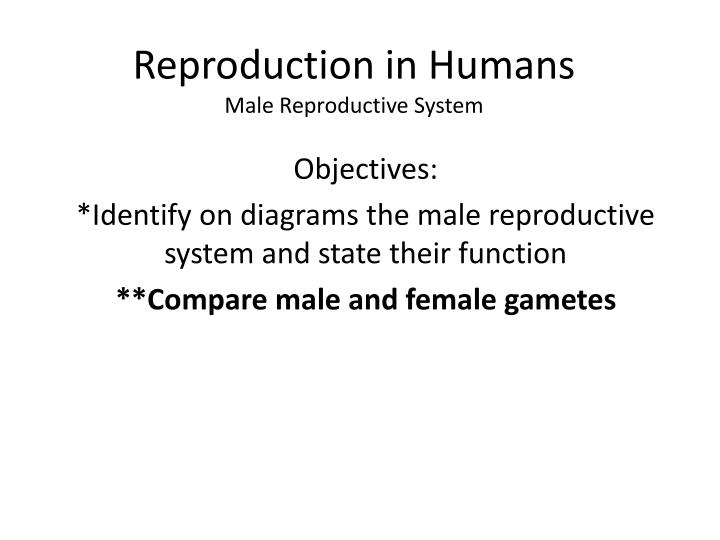 reproduction in humans male reproductive system n.
