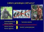 l albero genealogico dell uomo1