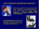 uomo di piltdown eoanthropus dawsoni 1