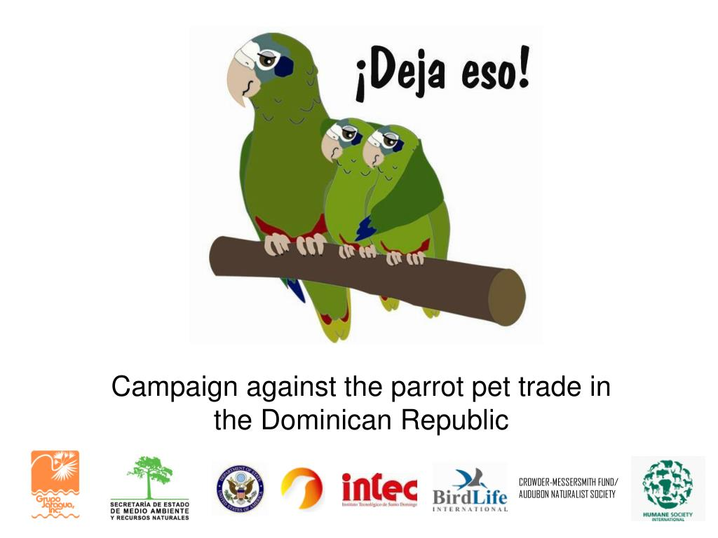campaign against the parrot pet trade in the dominican republic l.