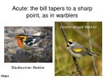 acute the bill tapers to a sharp point as in warblers