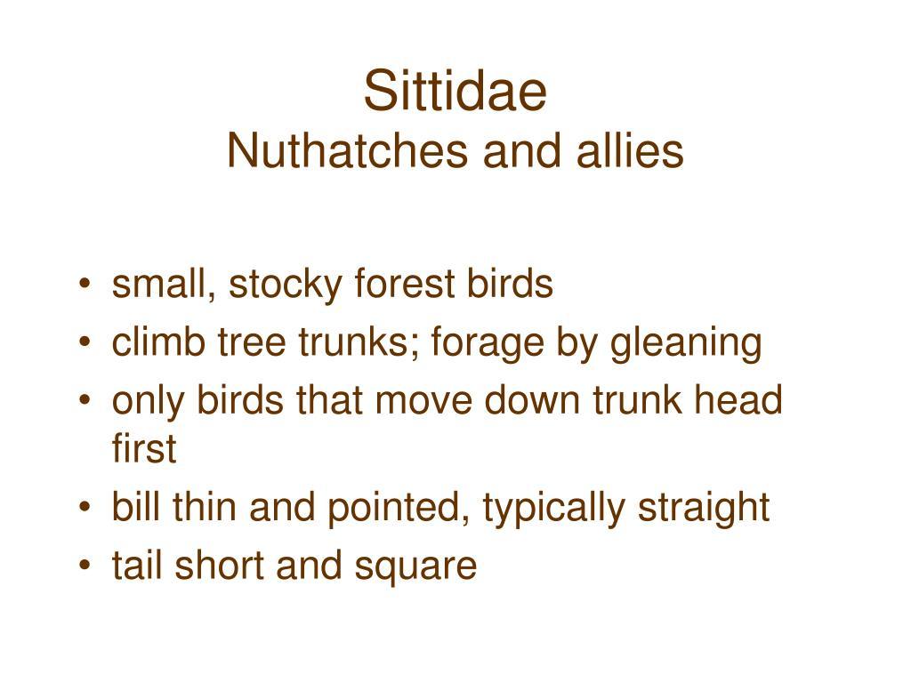 Sittidae