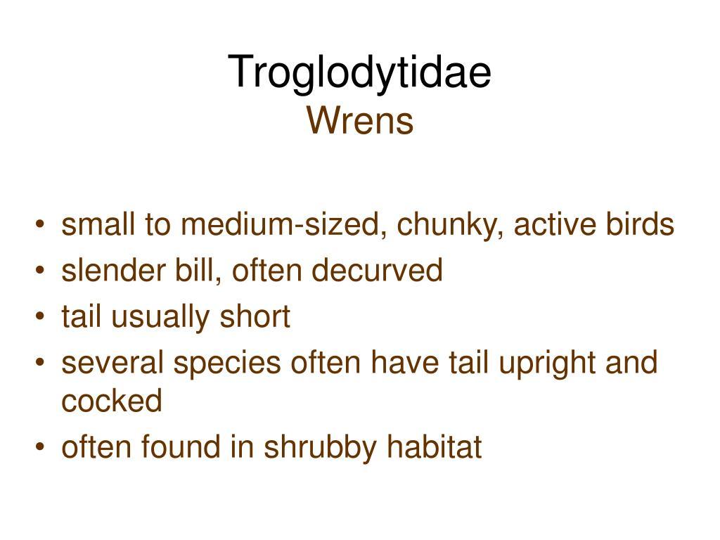 Troglodytidae