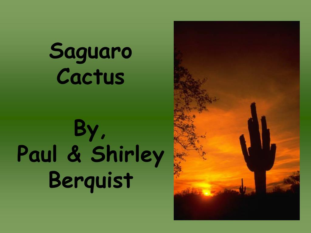 saguaro cactus by paul shirley berquist l.