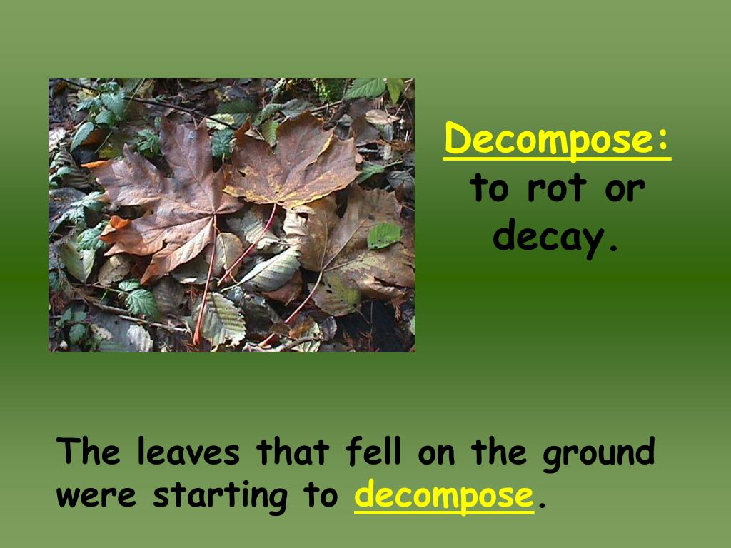 Decompose: