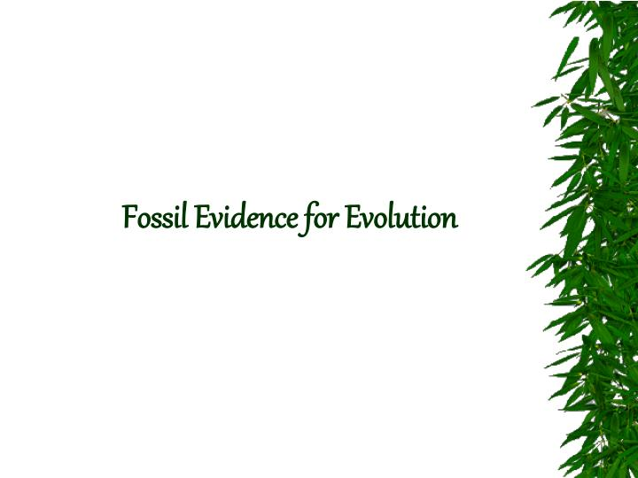 fossil evidence for evolution n.