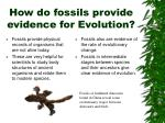 how do fossils provide evidence for evolution